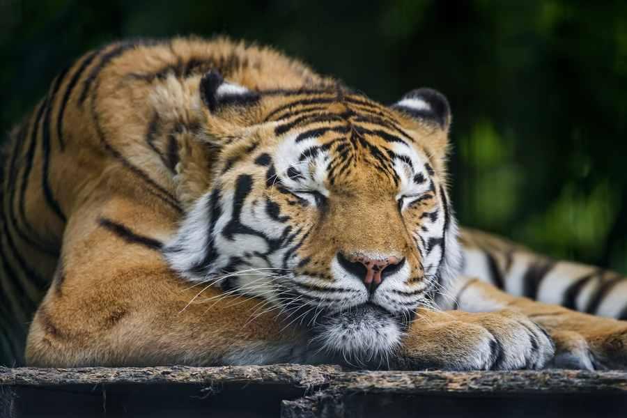 Les temps de sommeil des animaux